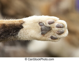 Cat paw, close-up shot.