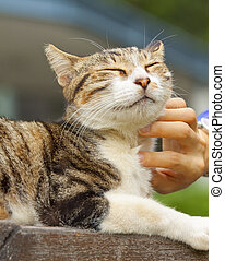 Cat scratching by human hands, feel very relax