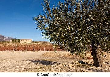 Paganos, Laguardia, Alava, Spain
