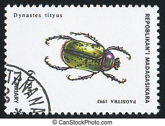 insect - MADAGASCAR - CIRCA 1993: stamp printed by...