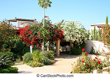 Cyprus house frontyard with bougainvillea colorful flowers.