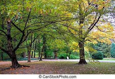 autumn trees in lazienki park, warsaw, poland