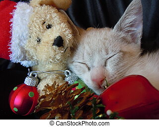 christmas nap - young cat taking a nap with christmas...