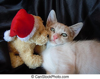 Shy christmas kiss. - shy little kitten and christmas friend