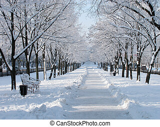 snowy avenue at winter day