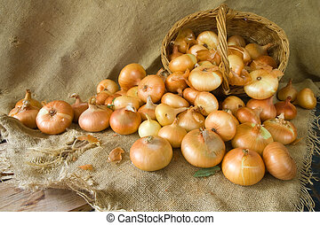 harvested onion on sacking - Close up of harvested onion on...