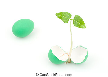 Sprout and egg - Sprout and green egg on a white background