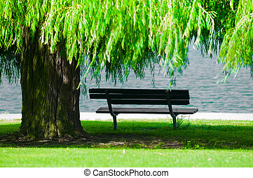 Park Bench with Weeping Willow - A park bench in shadow...