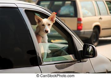 自動車, 窓, 掛かること, 犬, から