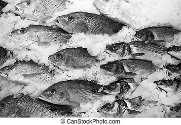 School Of Fish On Ice - A display of fresh-caught fish on...