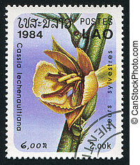 Cassia lechenaultiana - LAOS - CIRCA 1984: stamp printed by...