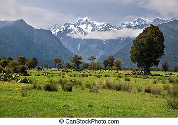 Looking to Mount Cook from Fox village, Westland National...