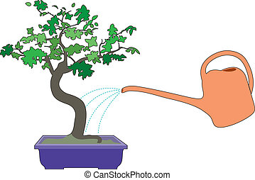 Bonzai and watering can - watering of bonsai