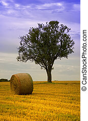 straw ball and a green tree in a field