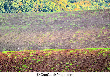 preparation of the fields in autumn