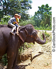 children riding on an elephant and having fun - boys riding...