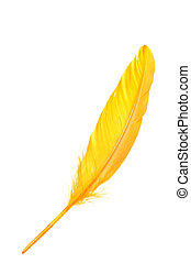 Orange feather isolated on white background - Orange wing...