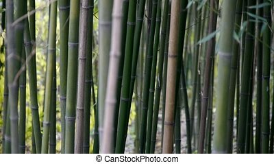wind shaking bamboo,quiet atmosphere in sunshine.