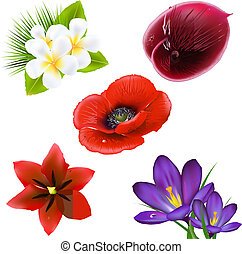Set Of Realistic Flowers, Isolated On White Background,...
