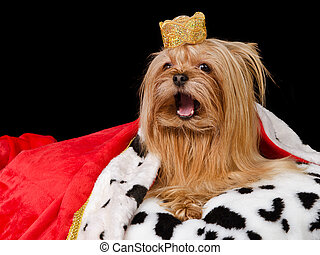 Takling royal dog with crown and gown