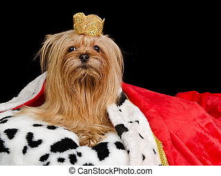 Royal dog with crown and gown, isolated
