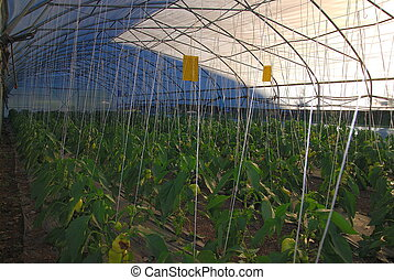 greenhouse inside NIKON D80; 672007; 150 at f8; ISO 100;...
