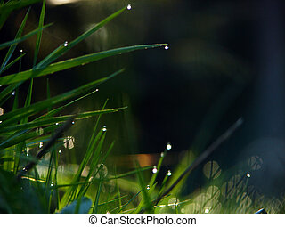fresh flower and grass background with dew  water drops
