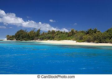 spiaggia, noce di cocco, albero, perfetto, blu, laguna,...