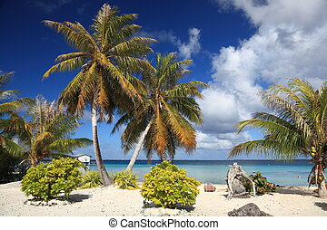 Dream Beach at Manihi Atoll in the South Pacific with Coconut Trees