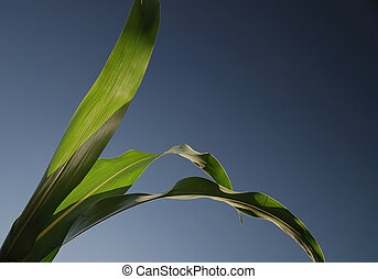 green leaf with blue sky in background