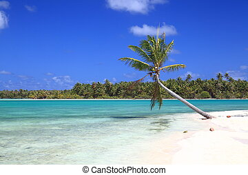 Lonely Coconut Tree on Dreamlike Island in the South Pacific...
