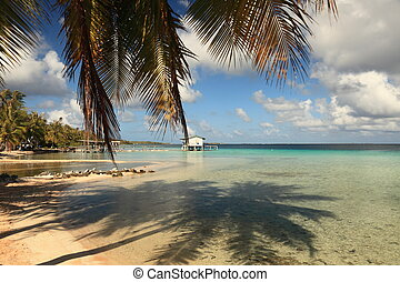 Dream Beach on Manihi Atoll in the South Pacific with Shadow of Coconut Tree in Turquoise Water.
