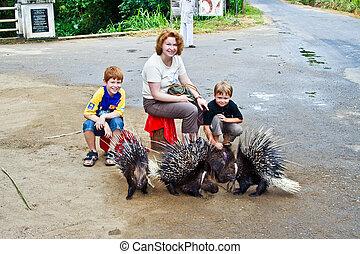 niños, acariciando, hedhehog