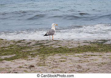Seagull looks at the sea photography
