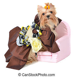 Royal dog with beautiful dress isolated