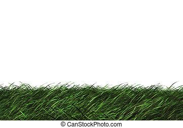3D grass - High resolution 3d green grass isolated on a...