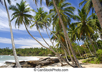 Tropical paradise on Sri Lanka with palms hanging over the...