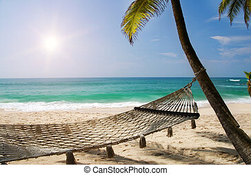 Under the palms - Romantic cozy hammock in the shadow of the...