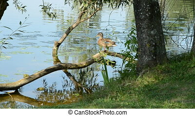 duck on the tree branch