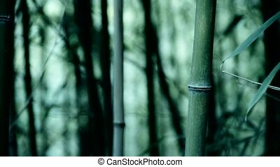 wind shaking bamboo,quiet atmosphere.