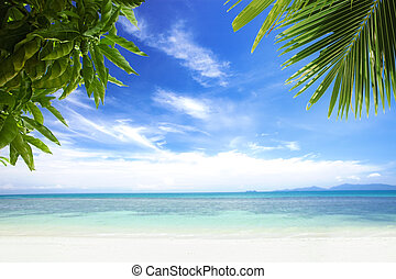 palms - View of nice tropical  beach  with some palms