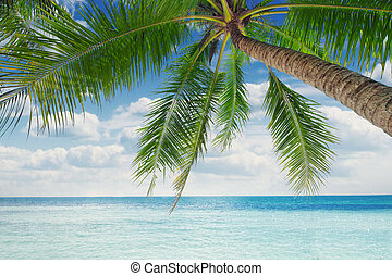 palm - View of nice tropical  beach  with some palms