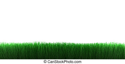 grass on white background - grass isolated on white...