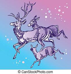 Family deer running