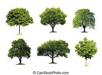 Green trees isolated - Trees collection