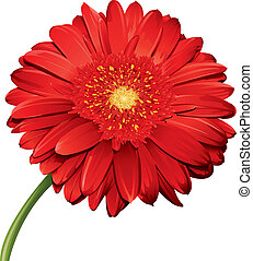 Detailed Flower - A detailed illustration of a gerbera daisy