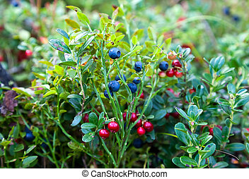 Wild berries on a green vegetative background in wood