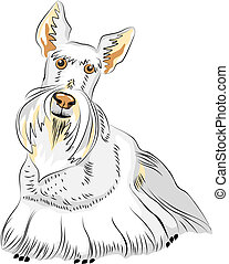 Vector Color Sketch Dog Breed Scottish Terrier - dog breed...