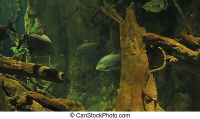 Under water - Different Fishes swimming under water.