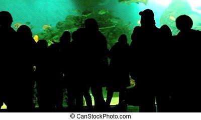 In the Aquarium - People watching fishes in a Aquarium.